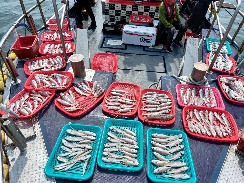 7월2일 해랑호 백조기 조황